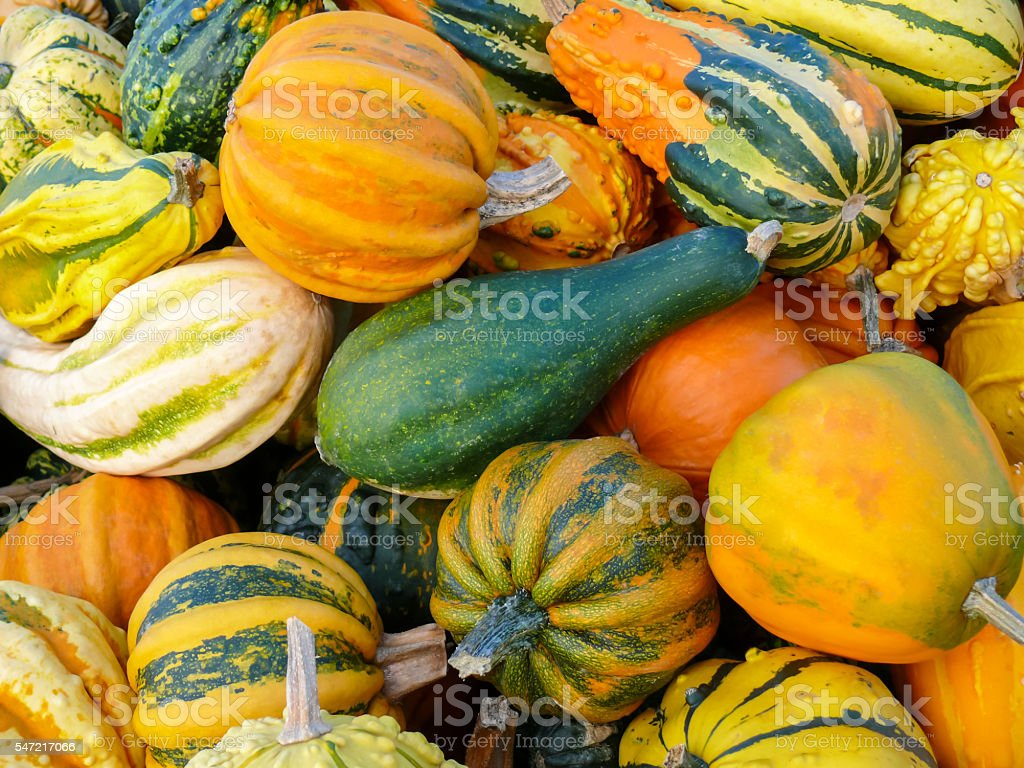 Pumpkins and Gourd Harvest VI stock photo