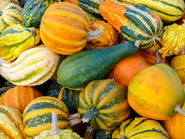 pumpkins and gourd harvest vi - gourd stock photos and pictures