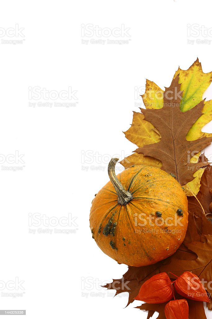 Pumpkins and gourds  isolated on white royalty-free stock photo