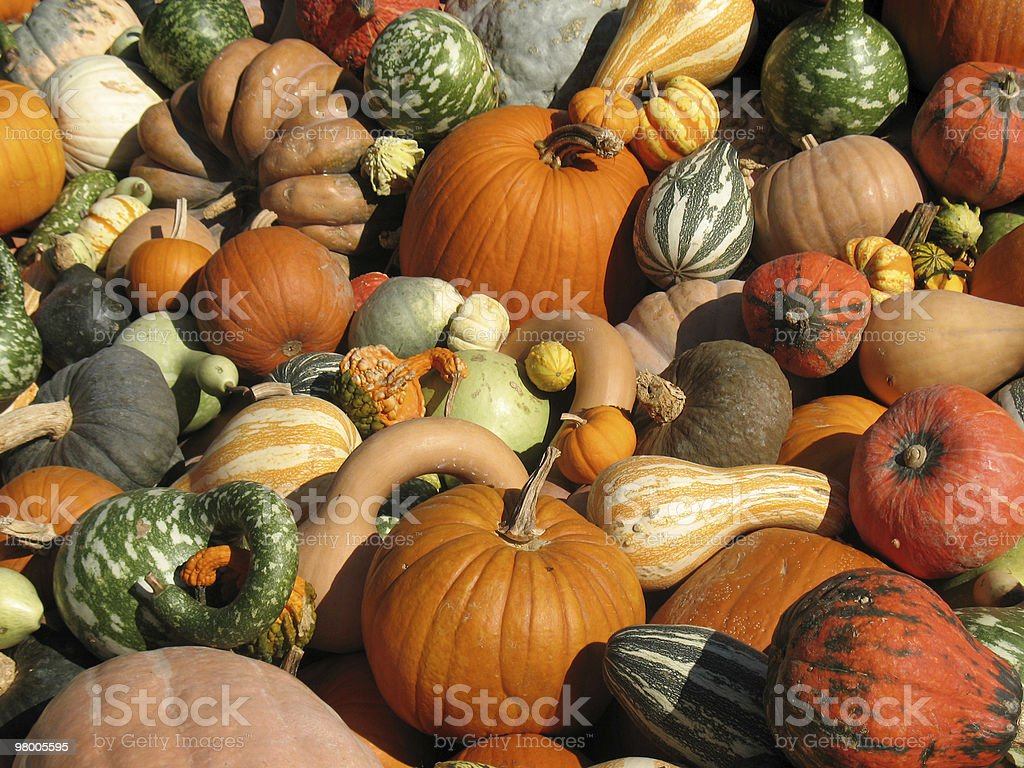 Pumpkins and gourds royalty-free stock photo
