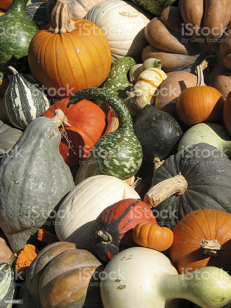 Pumpkins and gourds royalty free stockfoto