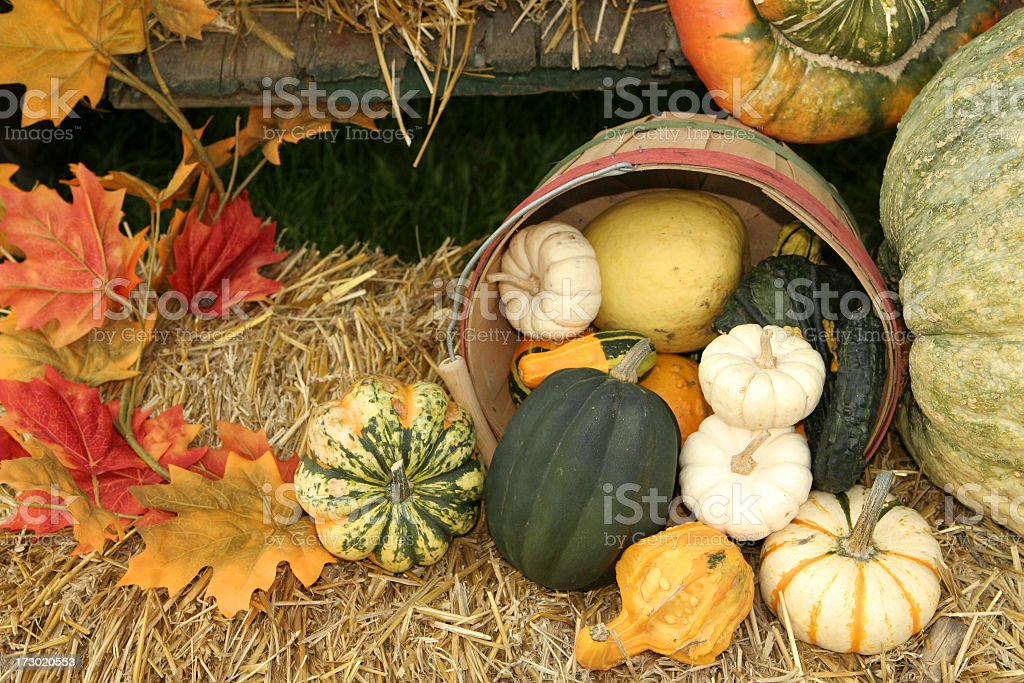 Pumpkins and gourds spilling out of a barrel in autumn stock photo