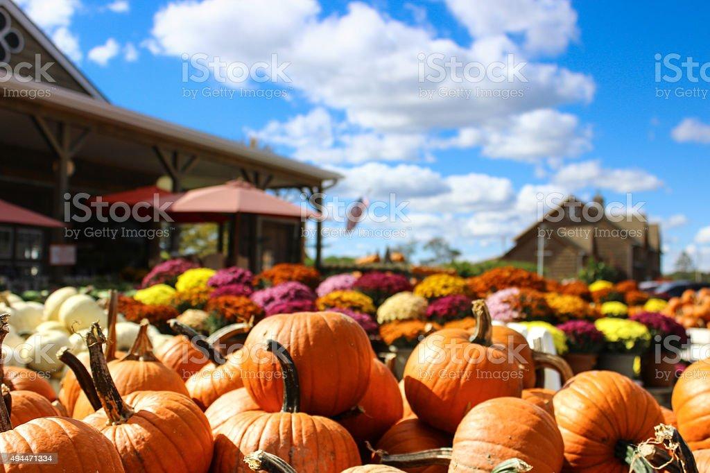 Pumpkins and Mums at Market stock photo