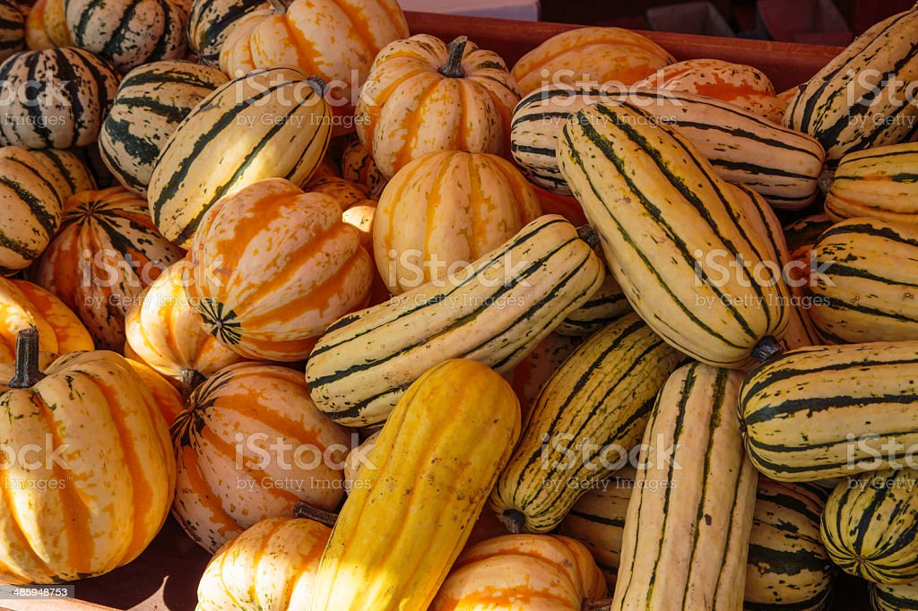 Pumpkins and Squash for Sale at Farmers Market stock photo