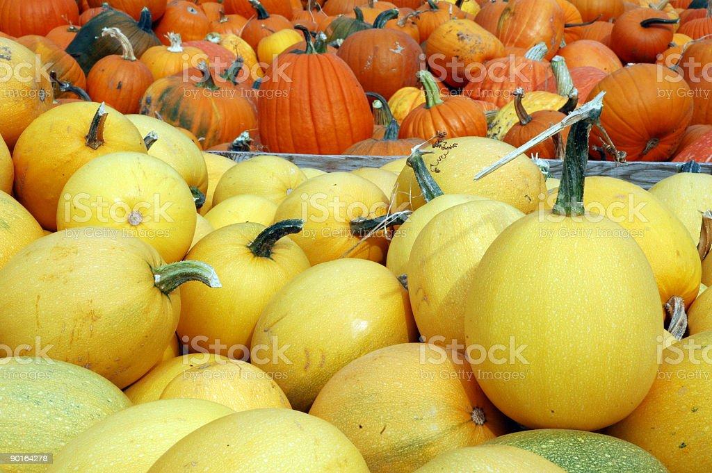 Pumpkins and Squash royalty-free stock photo
