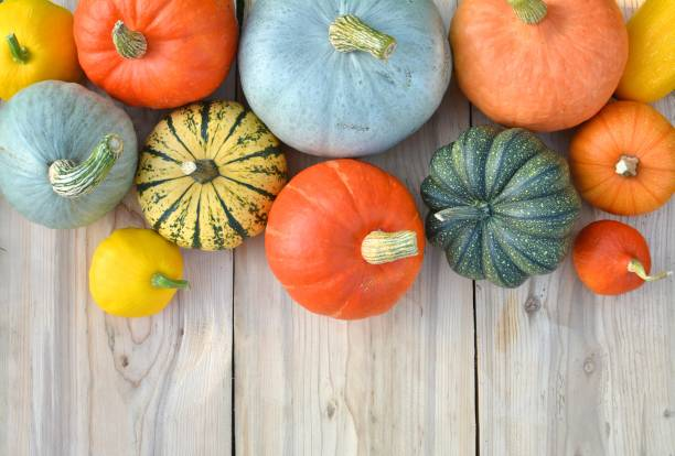 Pumpkins and squashes on wooden boards stock photo