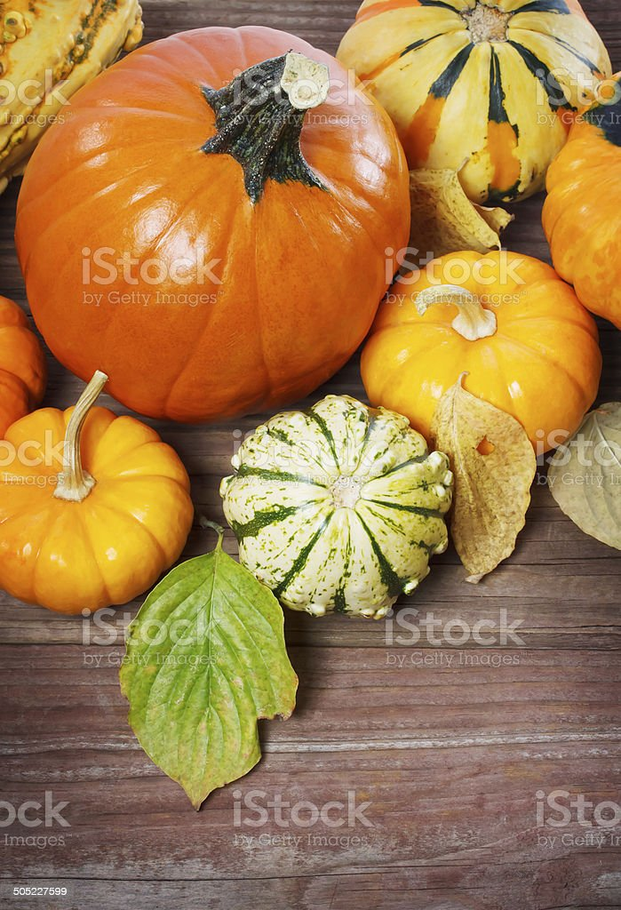 Pumpkins and squashes with autumn leaves royalty-free stock photo