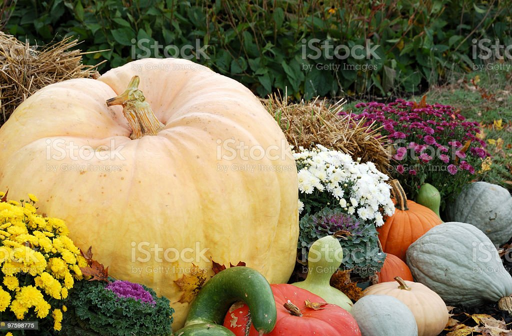 Pumpkins and Such royalty-free stock photo