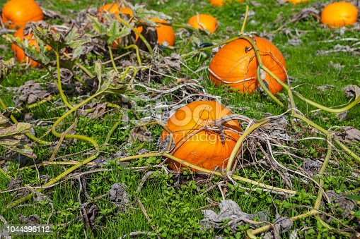 620705960istockphoto Pumpkins and vegetation 1044396112