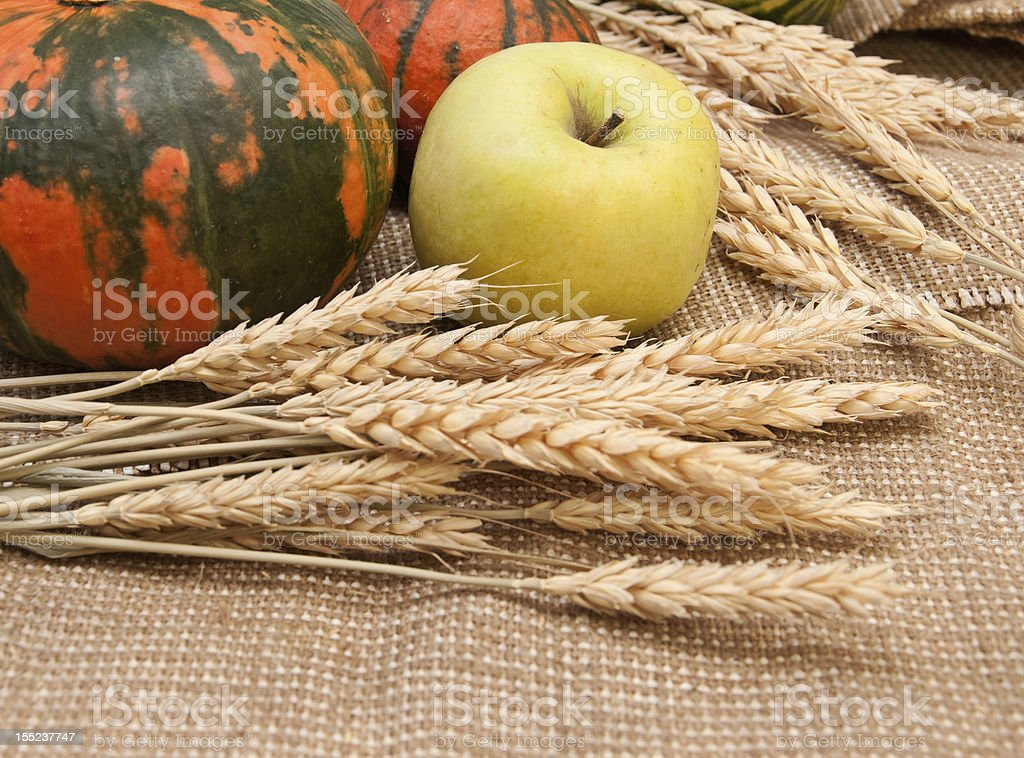 Pumpkins, apple and wheat royalty-free stock photo