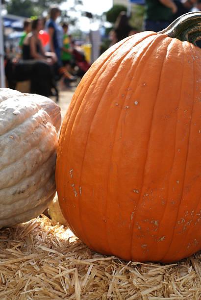 Pumpkins at the County Fair stock photo