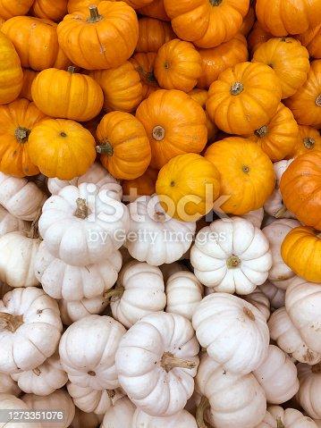 Pumpkins, autumnal harvest, small pumpkin, texture or autumn background.