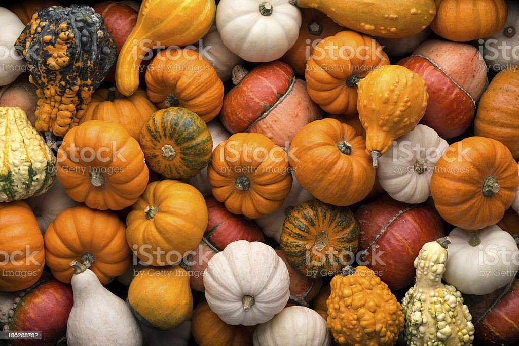 Pumpkins background royalty-free stock photo