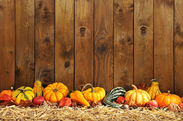 pumpkins border Thanksgiving - many different pumpkins on straw in front of old weathered wooden boards with copyspace anhydrous stock pictures, royalty-free photos & images