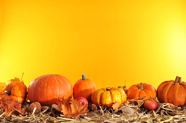 pumpkins border Halloween - many different pumpkins on straw in front of orange background with copyspace anhydrous stock pictures, royalty-free photos & images