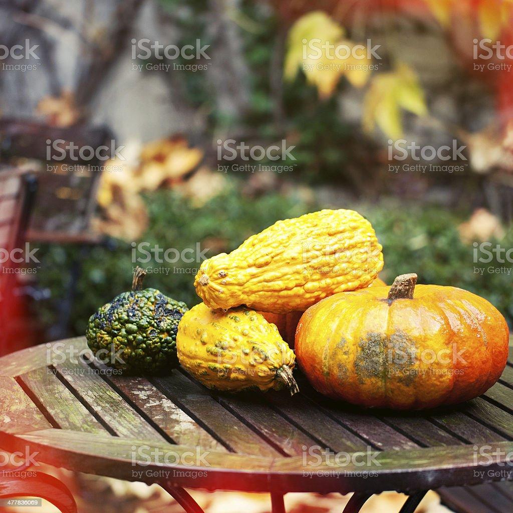 Pumpkins composition in a garden royalty-free stock photo