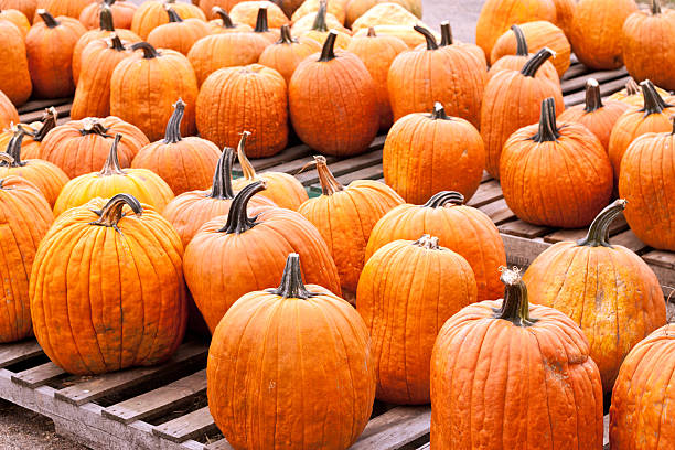 Pumpkins Farmers Market stock photo