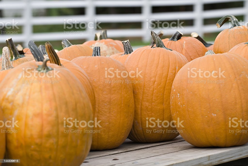 Pumpkins for Sale royalty-free stock photo
