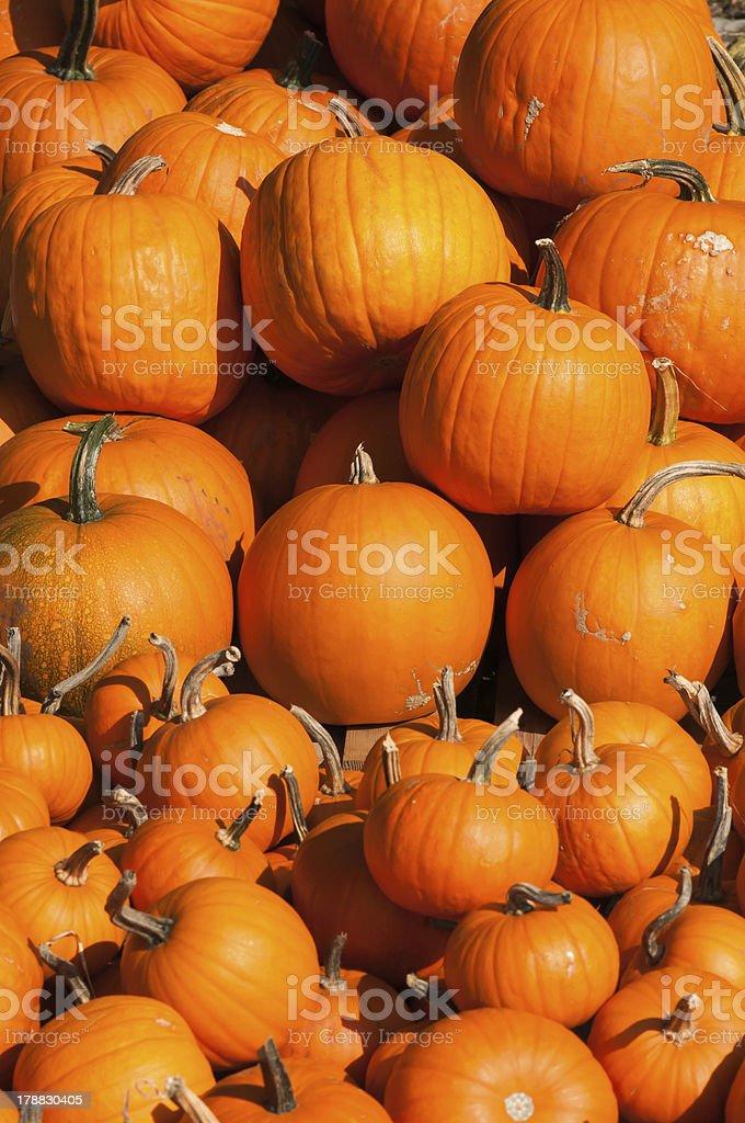 Pumpkins - freshly harvested royalty-free stock photo