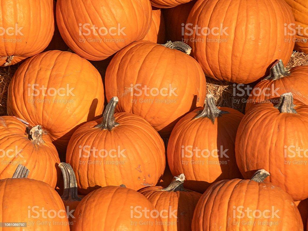 Pumpkins In A Bin stock photo