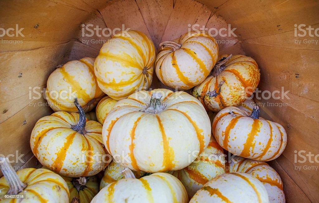 Pumpkins in barrel stock photo