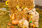 Pumpkins in basket and colorful autumn leaves