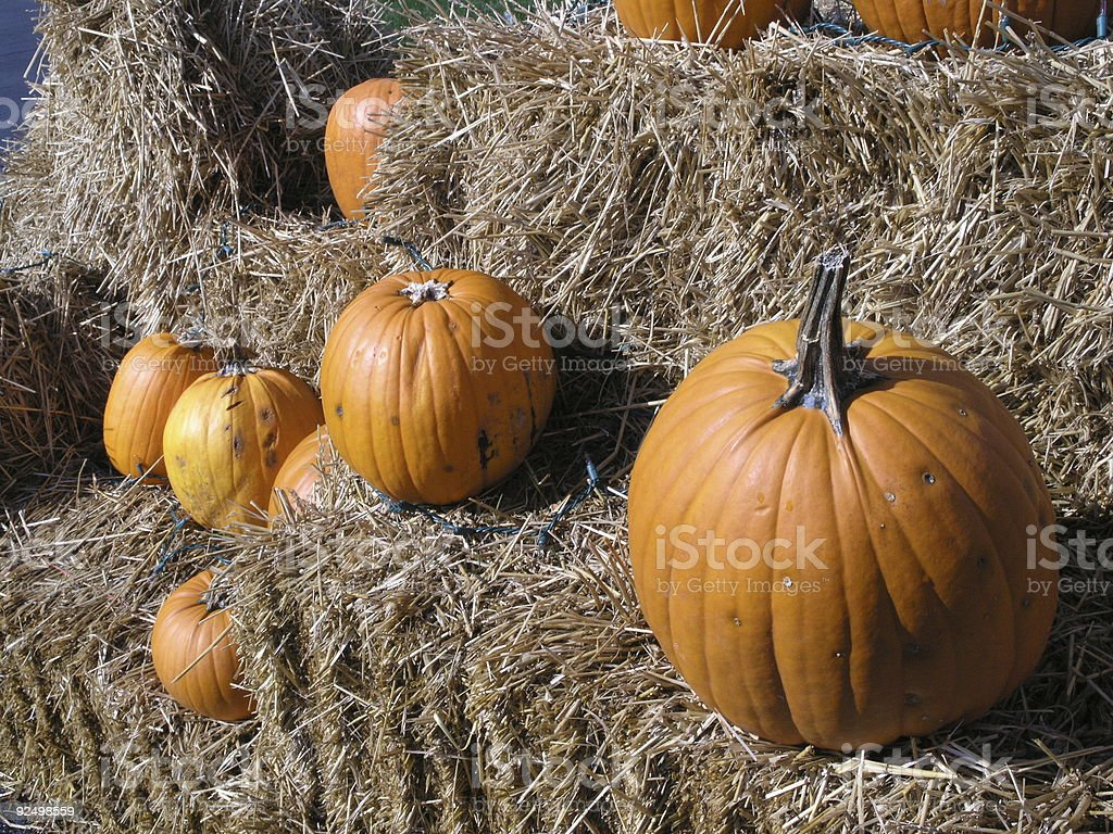 Pumpkins in fall royalty-free stock photo