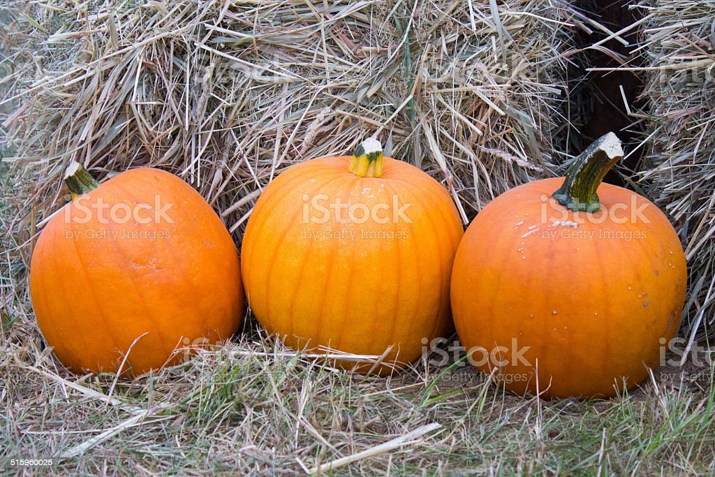 Pumpkins in Front of Hay Bales royalty-free stock photo