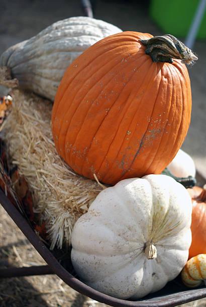 Pumpkins in Wheelbarrow stock photo
