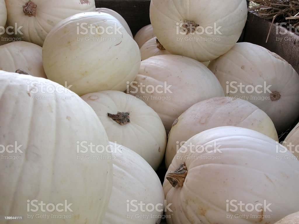 Pumpkins in white royalty-free stock photo