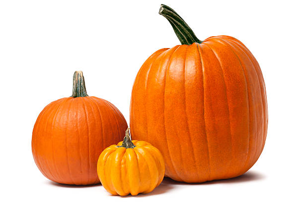 Pumpkins isolated on white with clipping path An arrangement of three pumpkins isolated on white with shadows - clipping path included pumpkin stock pictures, royalty-free photos & images