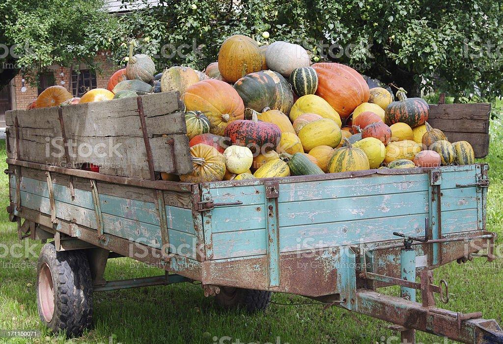 Pumpkins loaded onto a trailer stock photo