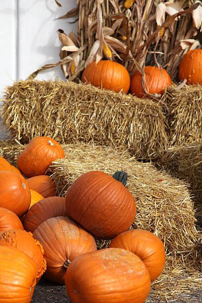 Pumpkins on a Haystack stock photo