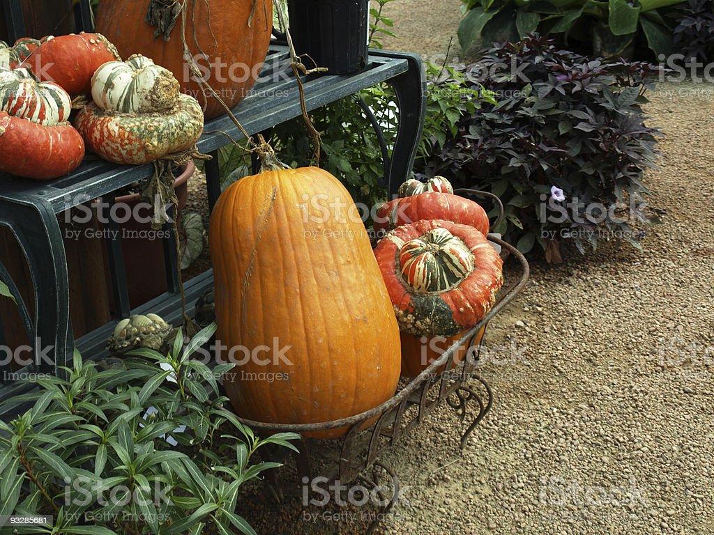 Pumpkins on a shelf royalty-free stock photo