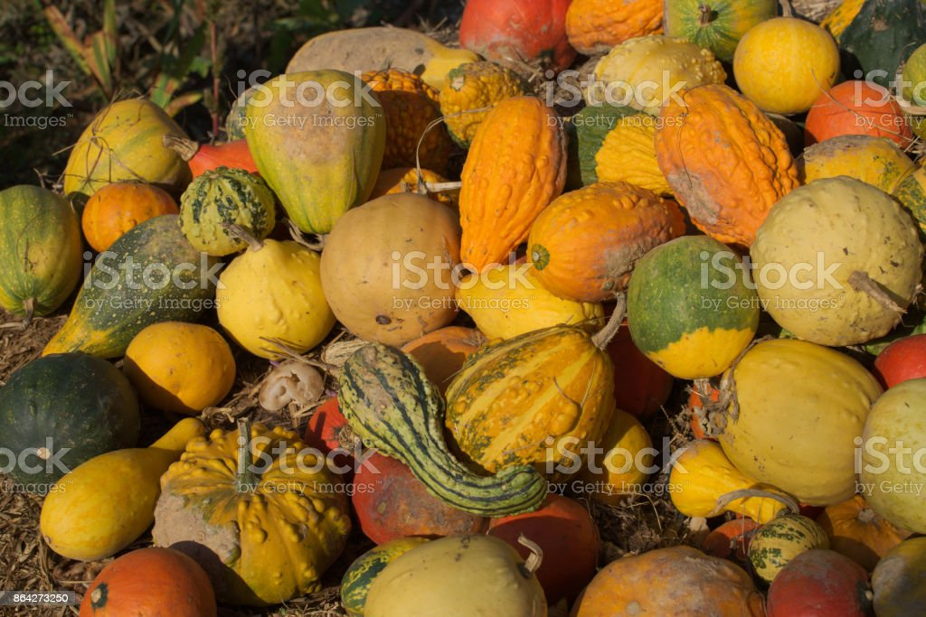 pumpkins on a straw bale royalty-free stock photo