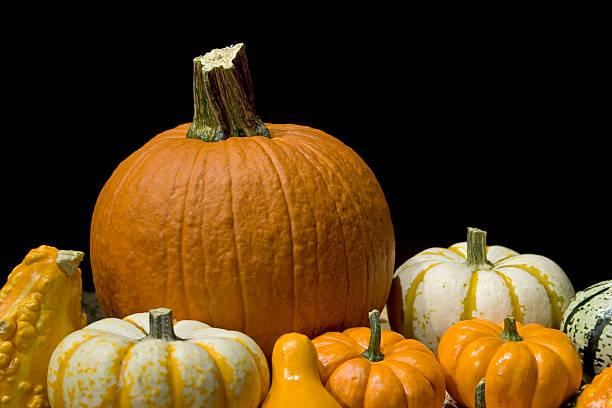 Pumpkins on black background stock photo