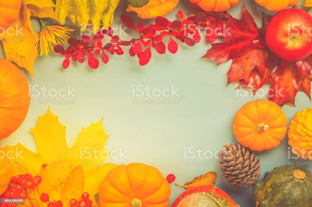 pumpkins on blue table royalty-free stock photo