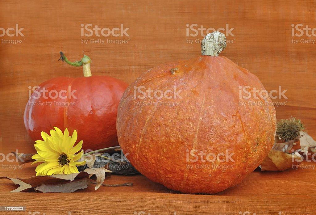 pumpkins on  orange background royalty-free stock photo