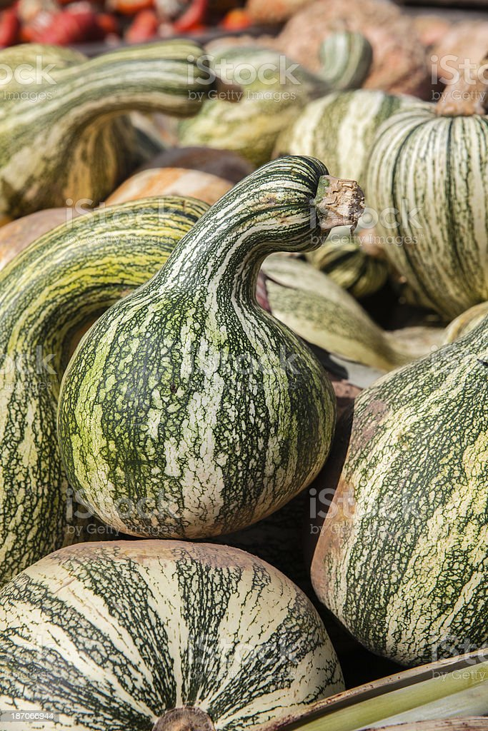 Pumpkins on the country fair royalty-free stock photo