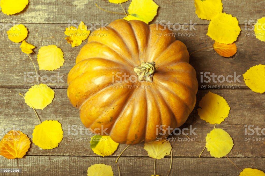 pumpkins 나무 의사협회 - 로열티 프리 0명 스톡 사진