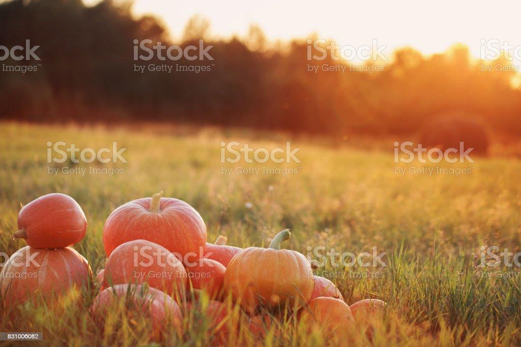 pumpkins on wooden table outdoor