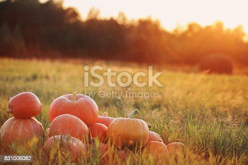 istock pumpkins on wooden table outdoor 831006082