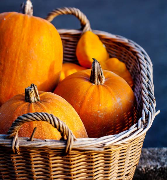 pumpkins - burma home do zdjęcia i obrazy z banku zdjęć