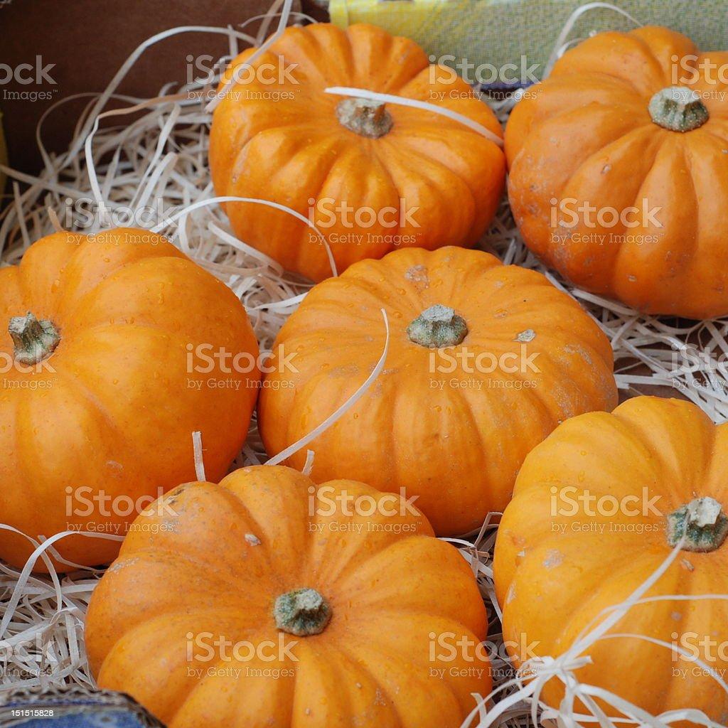 pumpkins pumpkins - lots of them Autumn Stock Photo