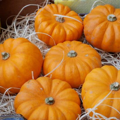Pumpkins Stock Photo - Download Image Now