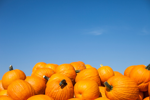 Real pumpkins with blue sky, taken with fisheye lens