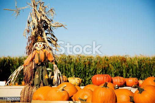 Pumpkins for sale in front of a corn field.