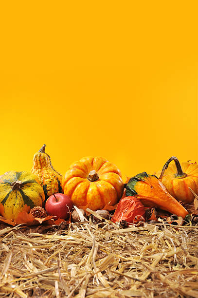 pumpkins Thanksgiving - many different pumpkins on straw in front of orange background with copyspace anhydrous stock pictures, royalty-free photos & images