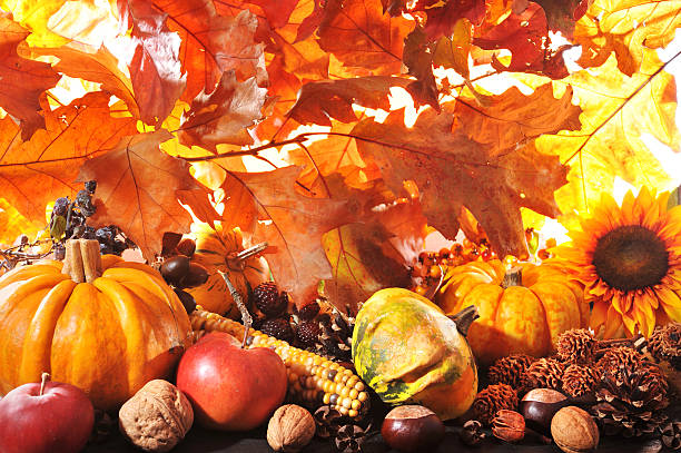 pumpkins Thanksgiving - different pumpkins with nuts, maize, berries and grain in front of highlighted oak foliage anhydrous stock pictures, royalty-free photos & images
