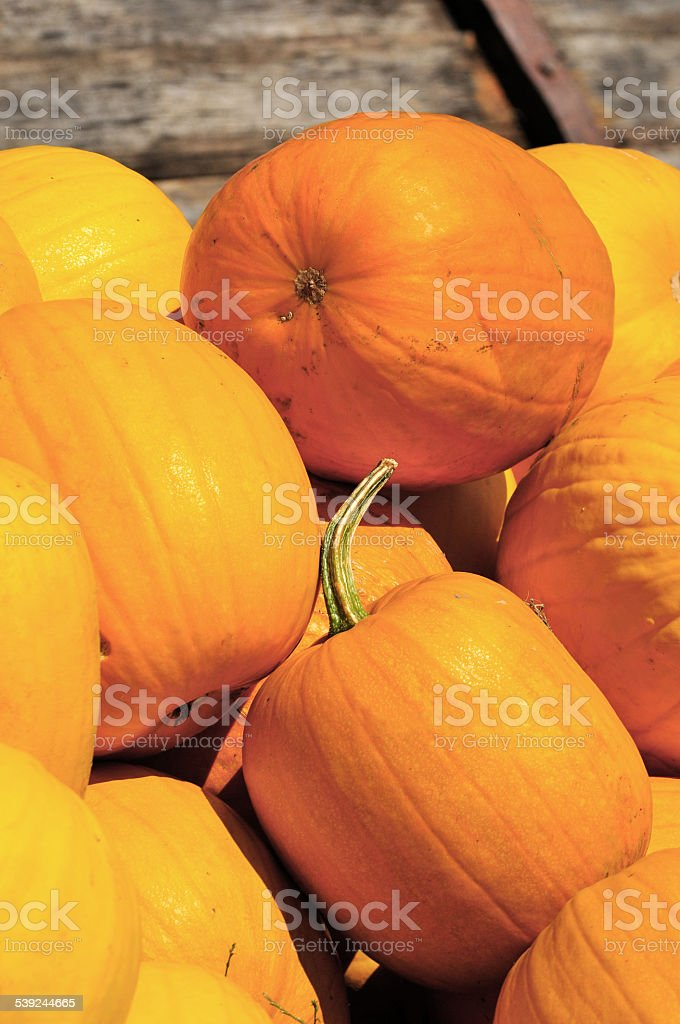Pumpkins foto de stock libre de derechos